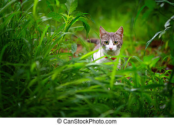curious cat in the green grass