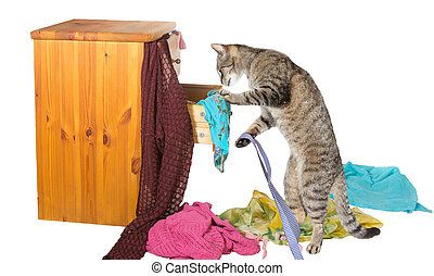Curious tabby cat standing on its hind legs rummaging in a chest of drawers with clothing strewn around on the floor in disarray