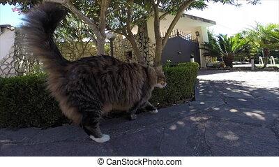 Curious Cat Smelling Camera