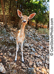 Curious dear - A cute and curious deer comes looking for a...
