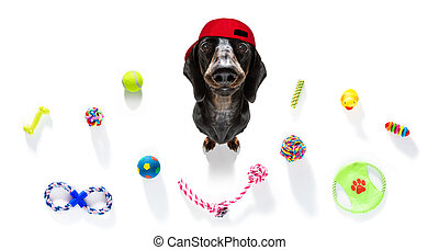 curious dog looks up with toys ready to play - curious ...