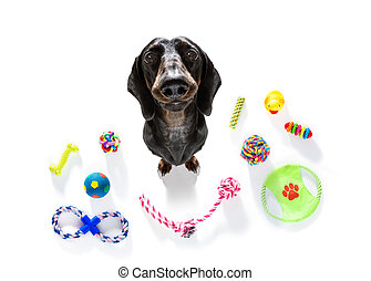 curious dog looks up with toys ready to play