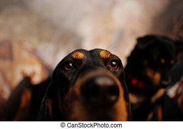 curious dog portrait indoors
