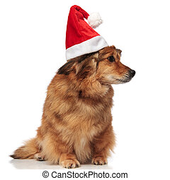 curious dog with christmas hat looks for presents to side