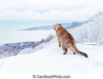 Curious explorer cat walking in winter outdoor.