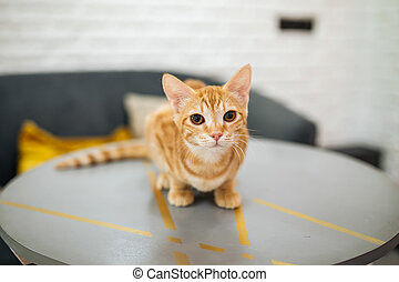 Curious ginger tabby young cat looking in camera