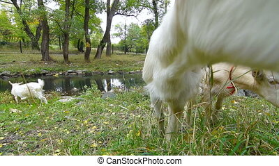 Curious Goat - Curious goat Wide Angle, Surface Level