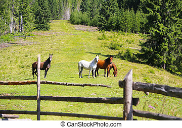 Curious horses on the green hill, beautiful horses scene grazing, countryside landscape