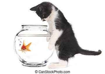 Kitten Looking at Goldfish in a Bowl