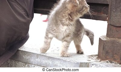 Curious kitten on a fence - A little fluffy kitten on an...