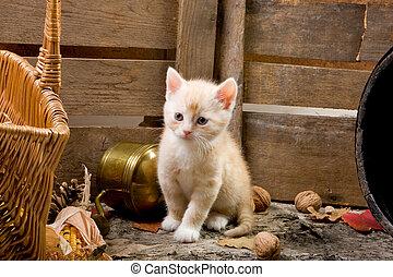 Curious kitten - Six weeks old kitten exploring the farm...