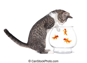 Kitten Watching Fish Swim With Paws on Aquarium - Curious...