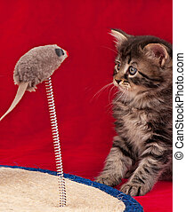 Curious little kitten on the scratching post over red ...