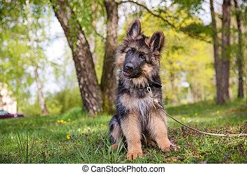 Curious little puppy