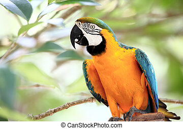 Curious Macaw - Beautiful Blue and Yellow Macaw