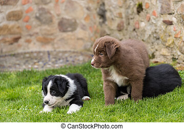 Curious puppies - close up