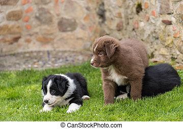 Curious puppies - close up