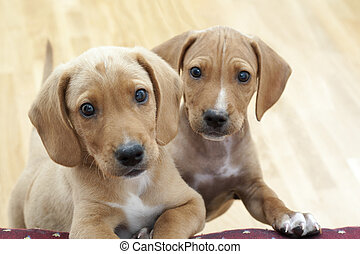 curious puppies