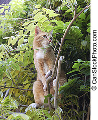 Curious red cat in tree