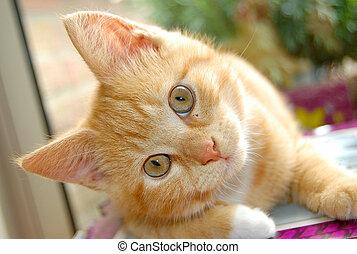Curious red kitten watching you