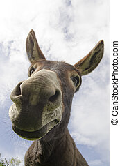 Curious Simple Jackass or Donkey - Humorous image of a jack...