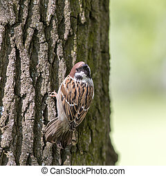 curious sparrow on a tree