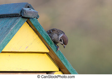 curious sparrow on the roof