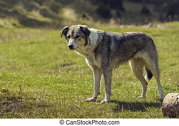 Curious stray dog