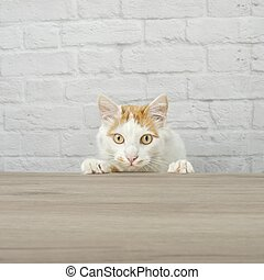 Curious tabby cat searching for food at the table. Square image with copy space.