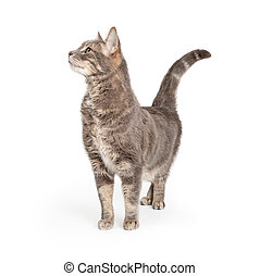 Curious Tabby Cat Stretching Neck Up Side