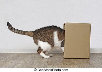 Curious tabby cat stuck his head inside a cardboard box. Side view with copy space.