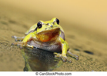 curious tree frog