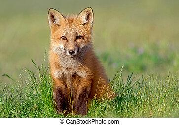 Resultado de imagen de baby fox