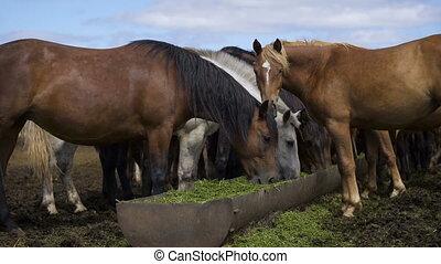 Curious young horses at an enclosure - Curious young horses...