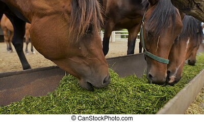 Curious young horses eating at an enclosure. Close-up. Nature and freedom. Power. Beautiful horses eating outdoors