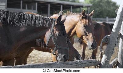 Curious young horses at an enclosure. Close-up. Nature and...
