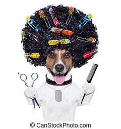 curlers, chien, coiffeur