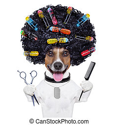 curlers, coiffeur, chien