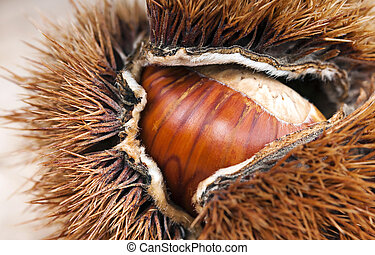 curly chestnut with chestnut macro