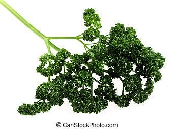 Curly English parsley