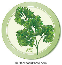 Curly Parsley Herb Icon. Fresh, flavorful leaves widely used in Middle Eastern, European cuisines and American cooking. Classic ingredient of French herb blends, Bouquet Garni and Fines Herbes. See other herbs and spices in this series. EPS8 compatible.