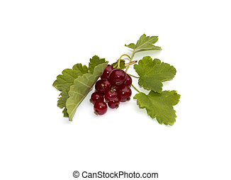 currant branch with leaves