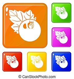 Currant icons set color