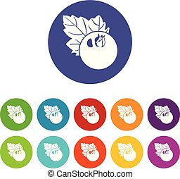 Currant icons set vector color
