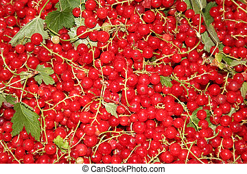 Currants 1 - Close-up of some red currants.