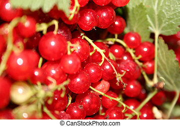 Currants 2 - Close-up of some red currants.