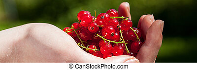 Currants in hand