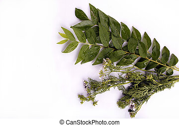 Curry leaves and cilantro