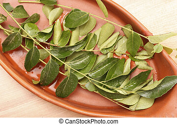 Curry Tree is a tropical to sub-tropical tree from India -...