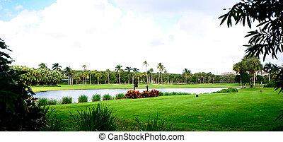 curso, coqueiros, golfe